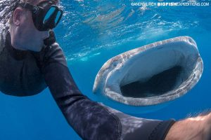 Selfie while snorkeling with a whale shark.
