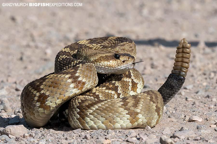 Southwest Snake Photography