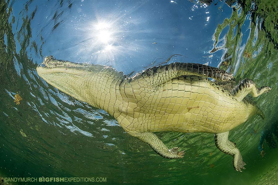 Snorkeling with crocodiles.