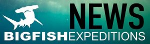 Big Fish Expeditions News