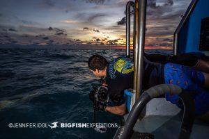 Shooting lemon sharks