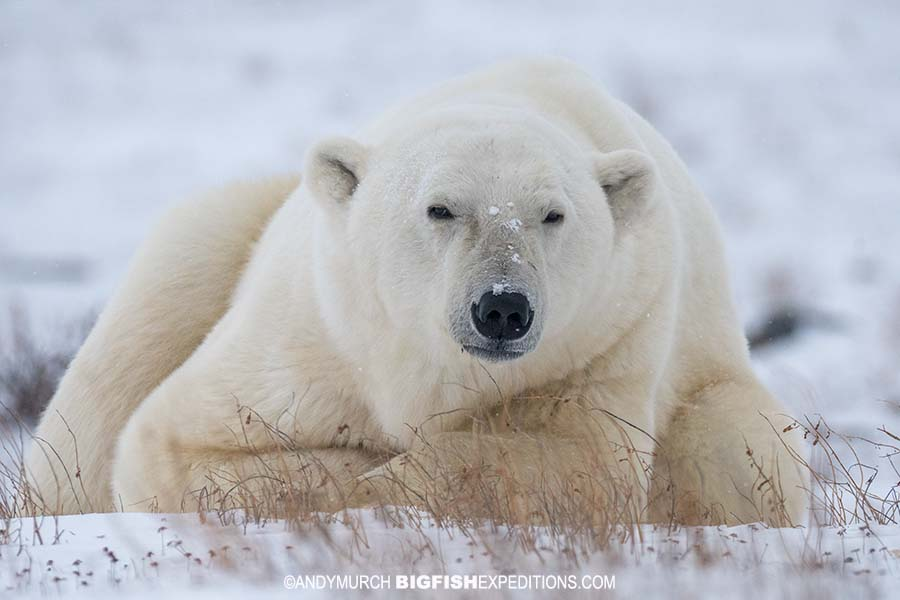 Polar Bear photo expedition