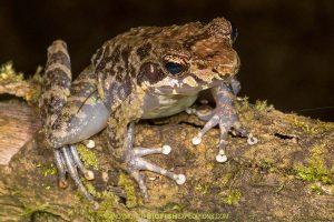 Herping-Madagascar
