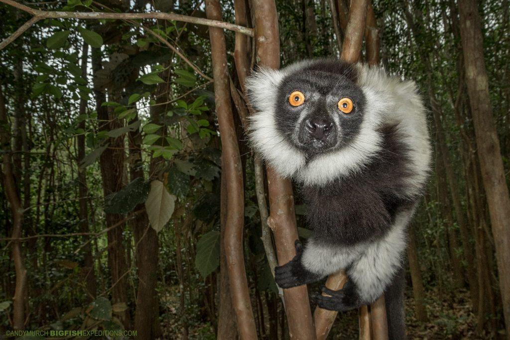 Madagascar Wildlife Adventure