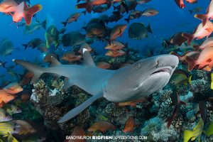 Diving with melon-headed whales, mantas, and sharks in Nuku Hiva, French Polynesia.