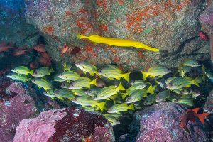 Reef diving French Polynesia.