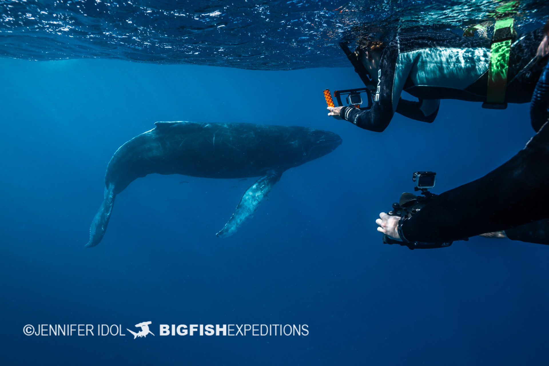 guests with humpback calf