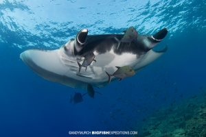 Socorro Manta Diving