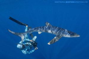 Snorkeling with mako sharks