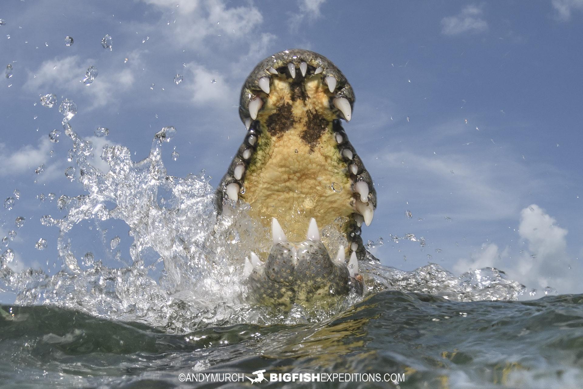 Crocodile diving trip