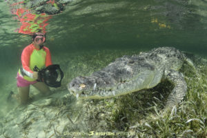 Snorkeling with crocodiles in Mexico
