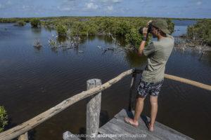 Photographing crocodiles in Chinchorro